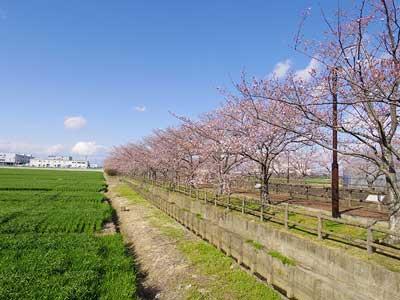 稲沢市の写真